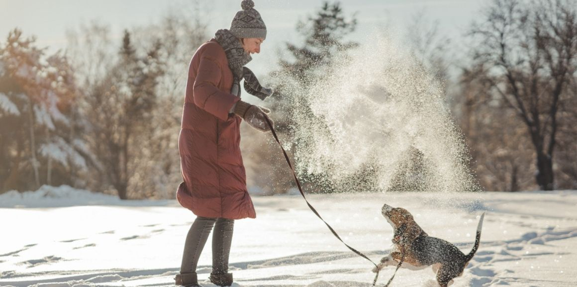 best dog jacket for winters 2021